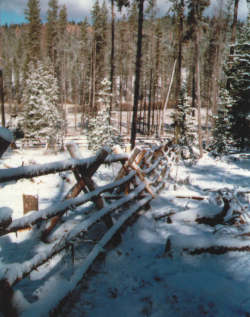 A jackleg fence made from dead lodgepole pines.
