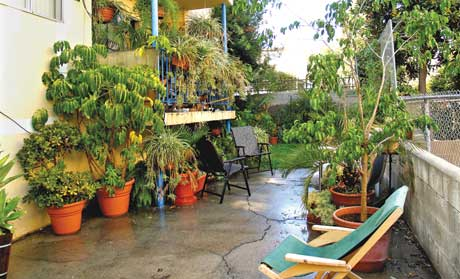 Daughter Cynthia's patio in Los Angeles