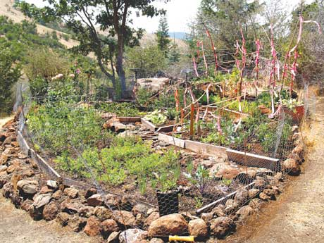 A community raised bed garden built of piled rocks is just beginning to flourish in spring.