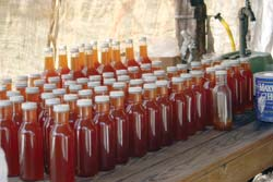 Bottles of freshly cooked cane syrup
