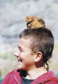 David when he was young with one of his pet chicks. Chickens are easily handled by anyone.