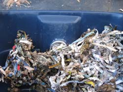 Use finished compost or topsoil and dampened shredded paper as bedding.