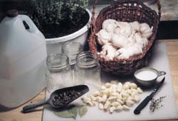 Garlic ready for pickling
