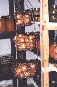 Onions hanging in ventilated baskets in fruit room