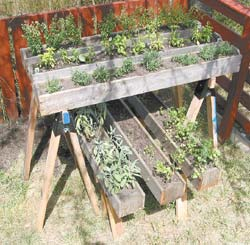 This two-tiered setup allows enough space to grow plenty of herbs in a mere five-foot square in my backyard.