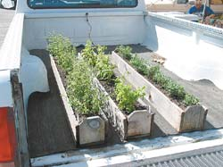 These herb boxes fit nicely in the bed of my pickup so I can take them to the produce stand to sell 'fresh cut herbs.'