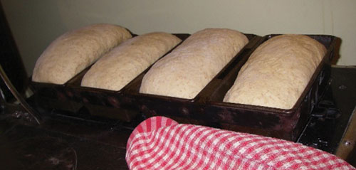 For the second rise, put the dough into greased bread pans and cover with a clean tea towel.