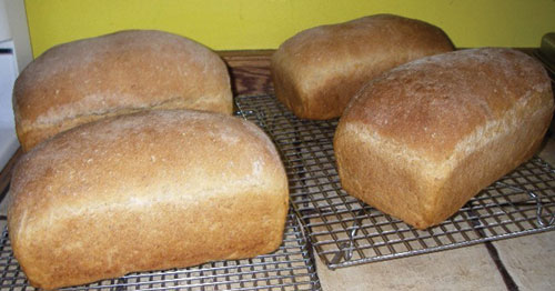 The baked bread loaves cool on wire racks.