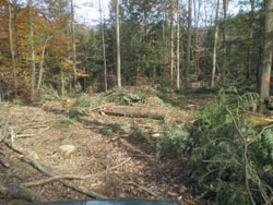 The general location of the pipe after the logging was done. It would have helped if I had had a better method of locating the pipe.