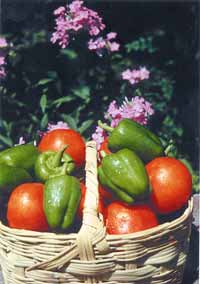 What's better than a combination of peppers and tomatoes to add to soups, sauces, salads, and to enjoy eating fresh in the garden?