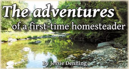 The adventures of a first-time homesteader By Jessie Denning