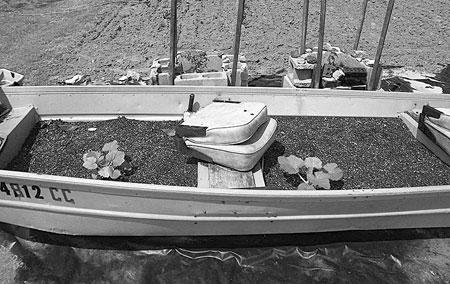 Planter made from an old boat