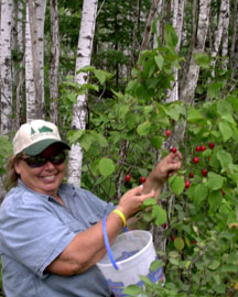 Jackie picking plums