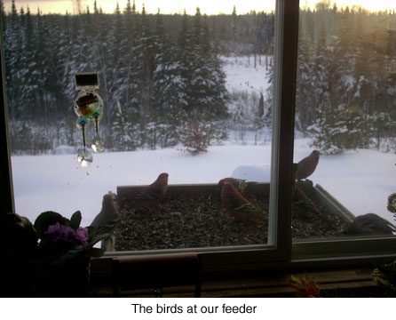 the-birds-at-our-feeders-jpeg.jpg