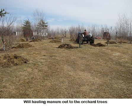 Manure-to-trees