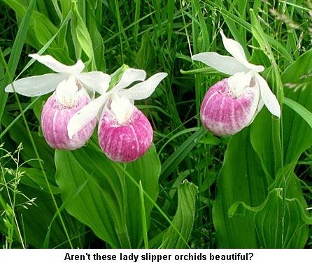 Ladyslippers_9141