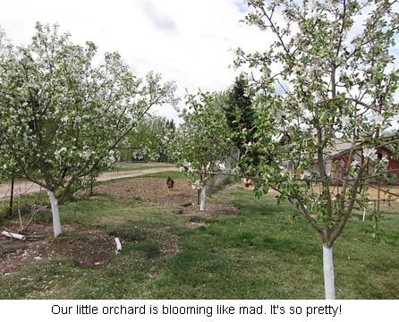 Orchard_0268