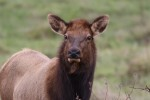 This is one of the cows that is in the herd. She seemed particulalry curious about what I was doing with the camera.
