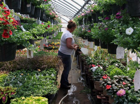 Jill Managing The Greenhouses