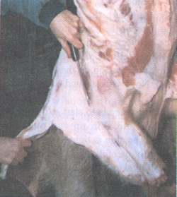 Figure 4. Skinning the foreleg.