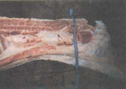 Figure 7. Separating the rear third of a pig.