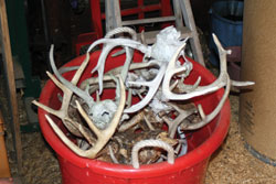 When a guy has this many harvested antlers in his barn, it's worth picking his brain for advice on local deer hunting. These belong to a good friend of mine, the local deer hunting guru.