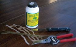 Beryl's grafting tools include grafting compound, knife, pruning shears, and grafting bands.