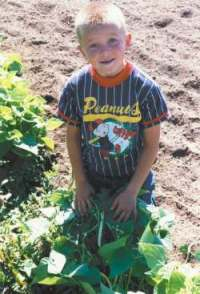 David Clay finds the first Contender green beans of summer.