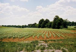 Oddly enough, productive land in the eastern U.S. like this cornfield might cost less than desert land in the west.