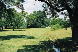 Pasture land in the eastern U.S. that is not near a city can often be found for affordable prices.