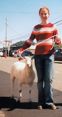 Michelle and Tippy (offspring of the sheep caught at the scramble) walk in the Curry County, Oregon, parade.