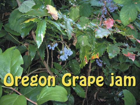 Oregon Grape Jam