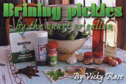 Brining pickles by the quart or gallon. By Vicky Rose