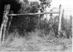 A poor fence brace. See how the lack of a diagonal brace has allowed both the corner post and the brace post to pull inward, towards the tension of the fence wire. A horizontal wooden brace and horizontal wire brace were not enough.