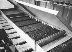 The heated germination bed in the author's home greenhouse. The covers can be lowered at night to provide even more warmth.