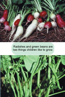 Radishes and green beans are two things children like to grow.
