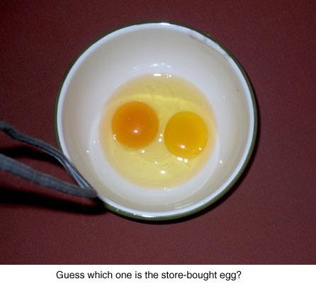 eggs-jpeg.jpg
