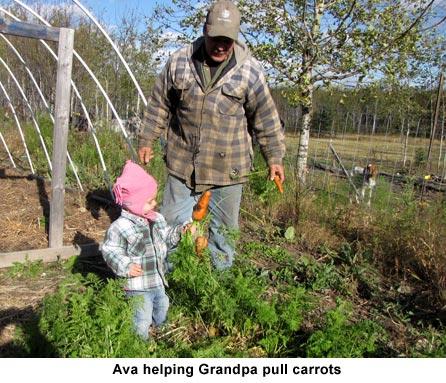 Ava-carrots