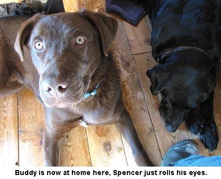 Buddy-Spencer