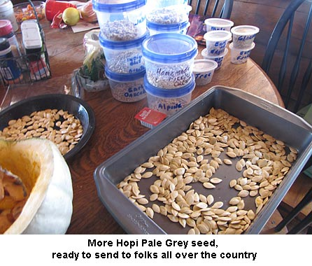 Hopi-seeds