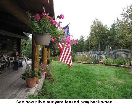 Yard-alive