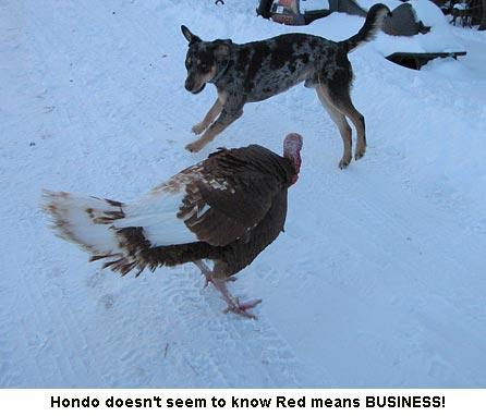 Red-Hondo-1