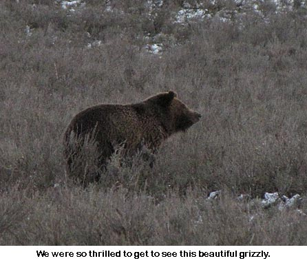 Grizzly_8900