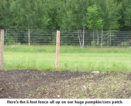Fence_9267