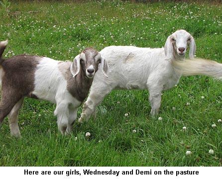 Wednesday-Demi_9262