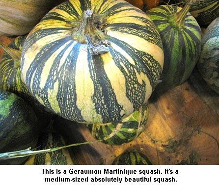 Geraumon-Martinique_9829