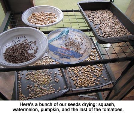 Seeds_9906