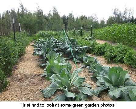 Garden_5799