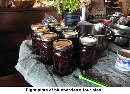 Blueberries_0505