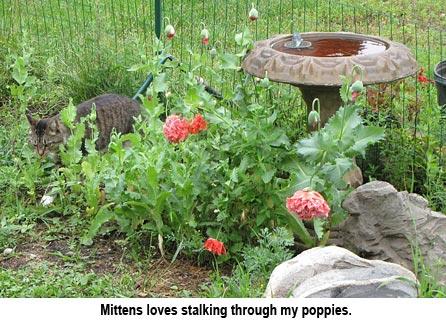 Mittens_poppies_0412